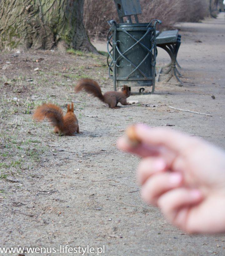 dwie wiewiórki