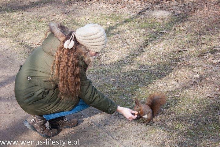 wiewiórka je z ręki orzecha 2