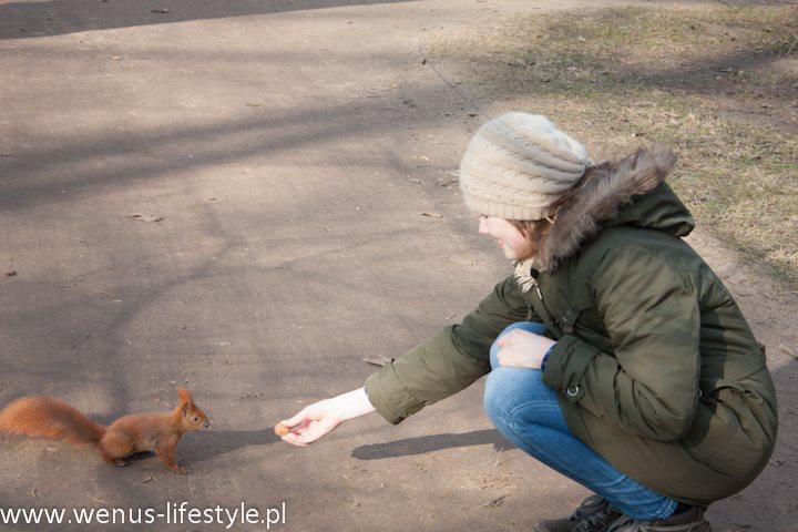 wiewiórka je z ręki orzecha